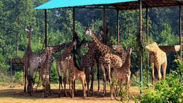Bangabandhu Safari Park Image